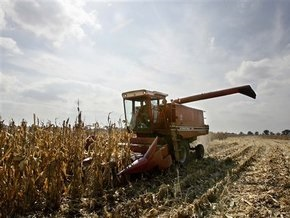 С начала года в Украине выросло производство сельхозпродукции