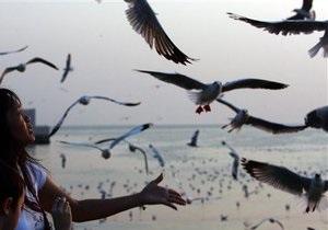 Ученые выяснили, как предки птиц научились летать