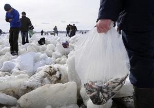 СМИ: Погибшую на Киевском море рыбу пытаются сбыть на столичных рынках