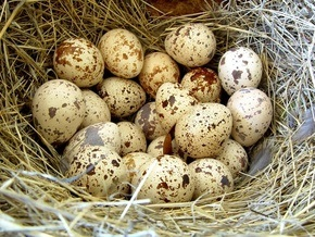 Об альтернативах куриным яйцам на Пасху