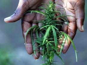 В России наркополиция изъяла полтонны марихуаны