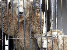 Посетители киевского зоопарка 12 дней смотрели на мертвого медведя