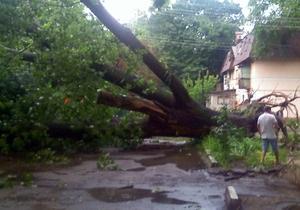 В Харьковской области дерево упало на движущийся автомобиль: двое погибших