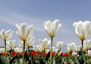 Завтра в Киеве открывается выставка ранневесенних цветов