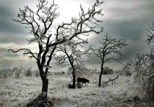 В Калифорнии прошел день поиска снежного человека