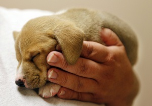 Киевлян призывают прививать домашних животных от бешенства