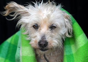 В Киеве появятся мобильные клиники для бездомных собак