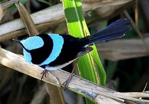 Ученые обнаружили у птичьих яиц способность к обучению