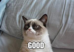 Grumpy Cat стал мемом года по версии Webby