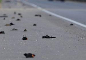 В Крыму зарегистрировали массовую гибель птиц