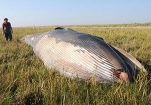 В Англии в траве у реки обнаружили десятиметрового мертвого кита