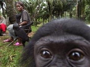 У обезьян обнаружили альтернативные GPS-навыки