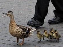 В Европе запретили утку по-пекински