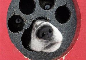 Собака записала хит, собравший более миллиона просмотров на YouTube
