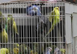 В Новой Зеландии спустя несколько дней после землетрясения  из-под завалов спасли двух попугаев