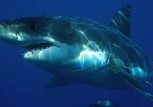 В Новой Зеландии акулы растерзали известного режиссера