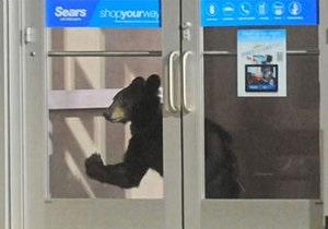 В США в торговый центр забрела медведица