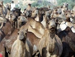 Экологи призвали австралийцев есть верблюжатину