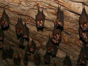 Рада не поддержала законопроект Ющенко о сохранении летучих мышей