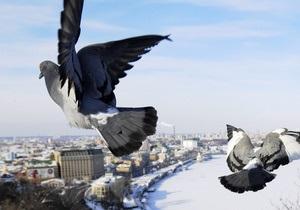 В Киеве за неубранный снег и сосульки инспекторы вручили 160 предупредительных предписаний
