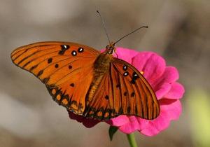 Новости Великобритании: В Великобритании пересчитают бабочек