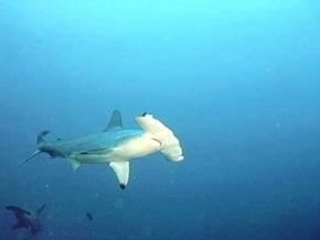 В зоопарке США по неосторожности рабочих погибли акулы-молоты