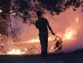 В трех областях Украины бушевали лесные пожары