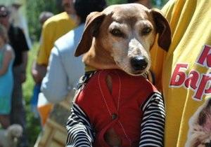 В Киеве пройдет выставка беспородных собак