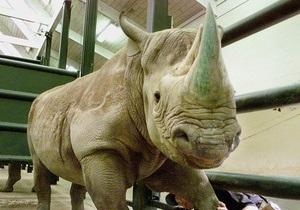 В австралийском зоопарке при невыясненных обстоятельствах одновременно скончались четыре носорога