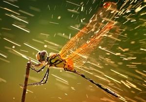 Фотогалерея: Лучшее от National Geographic. Итоги фотоконкурса за 2011 год
