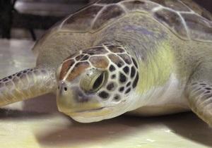 В Нью-Йорке сто черепах выползли на взлетную полосу международного аэропорта