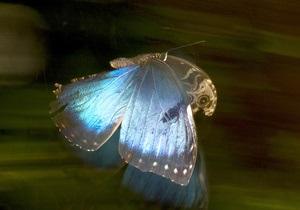 Ученые научились использовать крылья бабочек для измерения температуры