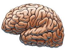 Ученые: Долгосрочную память недооценивали