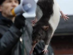 Фотогалерея: Революционные крысы на Крещатике