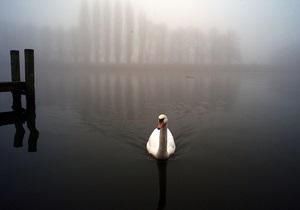 Наводнение на Темзе помешало провести перепись лебедей королевы