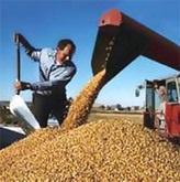 Украинские аграрии потеряли 15 млрд гривен