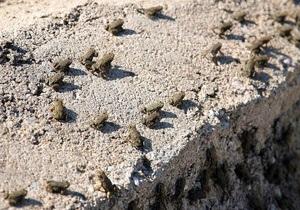 На севере Греции из-за нашествия лягушек перекрыли автостраду
