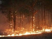 В Харьковской и Черниговской областях бушуют лесные пожары