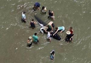 Британские ученые готовятся предотвратить  массовое самоубийство дельфинов