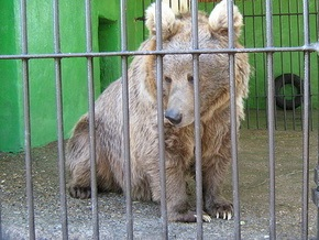 В России задержан китайский контрабандист с партией медвежьих лап