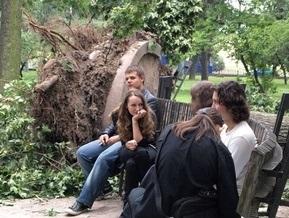 Фотогалерея: Львов. Жизнь после урагана