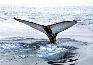 На берег Англии вынесло мертвого кита
