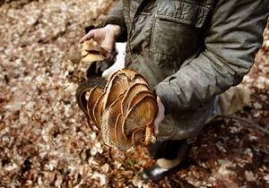 В Херсонской области четыре человека отравились дикорастущими грибами
