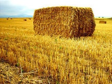 Ученые нашли новый способ увеличить производство биотоплива