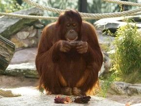 В Австрии обезьяна стала популярным фотографом