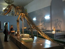 В пустыне Гоби найден почти целый скелет тарбозавра