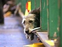 В Мариуполе будут сжигать бездомных собак
