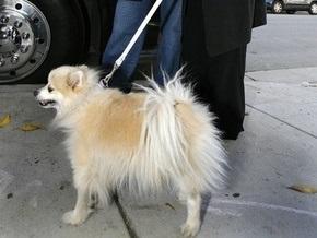 Койот съел любимую собаку Оззи Осборна