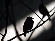 В Севастополе обнаружен птичий грипп
