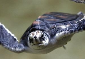 Дальневосточные черепахи выделяют жидкие экскременты через рот - ученые